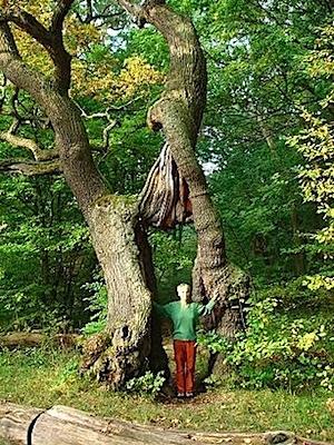 Baum kennenlernen